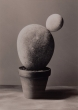 "Madoz, Chema - ""Untitled"" (1998)"